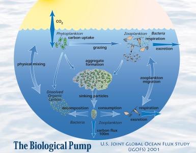jgofs-biological-pump_2