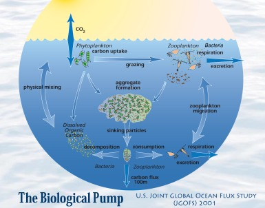 jgofs-biological-pump_2